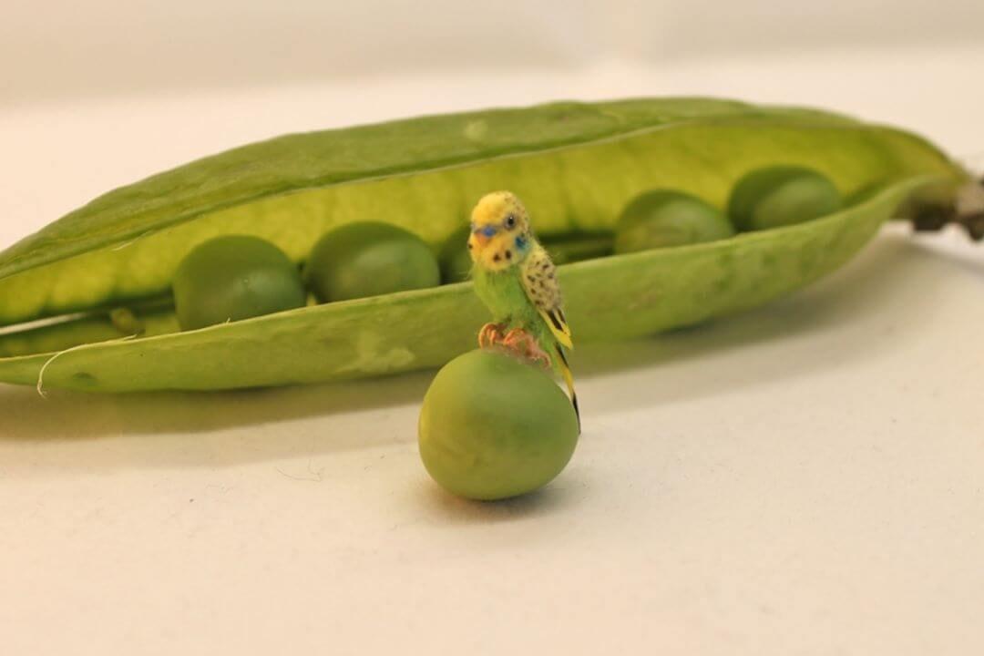 10-Green-Budgie-Parakeet-Katie-Doka-Hand-Sculpted-Dollhouse-Miniature-Animals-www-designstack-co