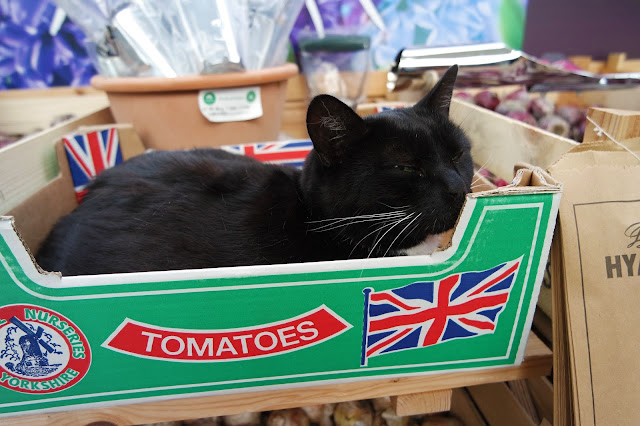 cat sitting in tomato box