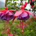 Most Incredibly Rare Flowers in The World
