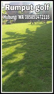 Supplier jual rumput taman malang termurah ( foto hasil pekerjaan terbaru kita ) tahun 2021