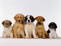 Perros en fila