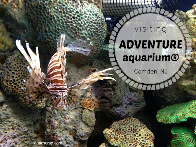 Visiting Adventure Aquarium In Nj