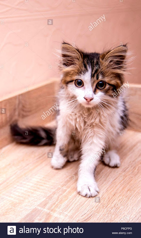 A little funny kitty with big eyes Stock Photo 210488168 Alamy