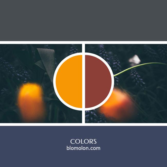 variedad_en_color_color_8