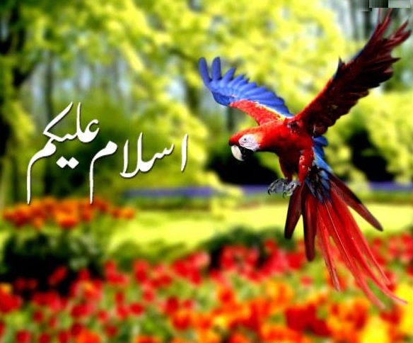 Beautiful Wallpapers With Quotes In Urdu Subha Bakhair Pictures In Urdu Latest Images Free Download