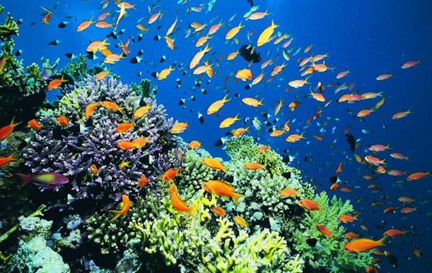 Pengertian Ekosistem Akuatik, Ciri dan Macamnya