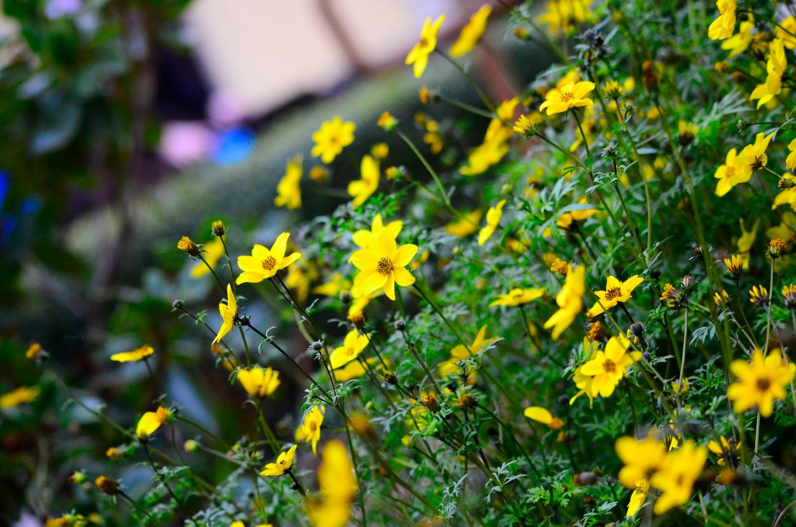 jesień | kwiaty | żółć | zieleń | krajobraz | natura