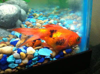 Asking for Help when your Pet Fish in trouble