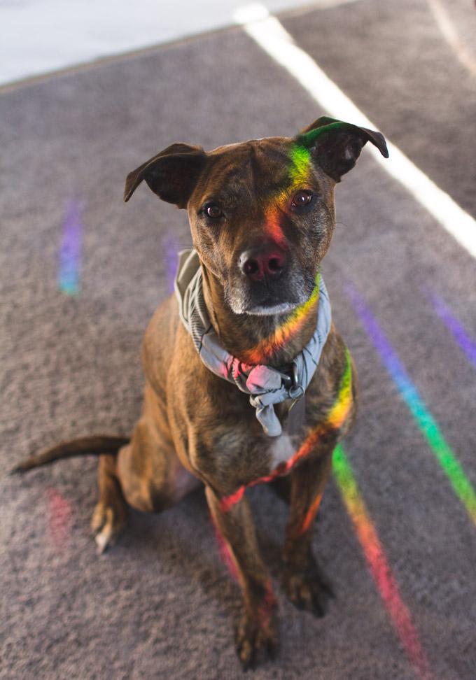 Rainbow Axicon Window Suncatcher, rainbow maker, brindle, rainbow maker review