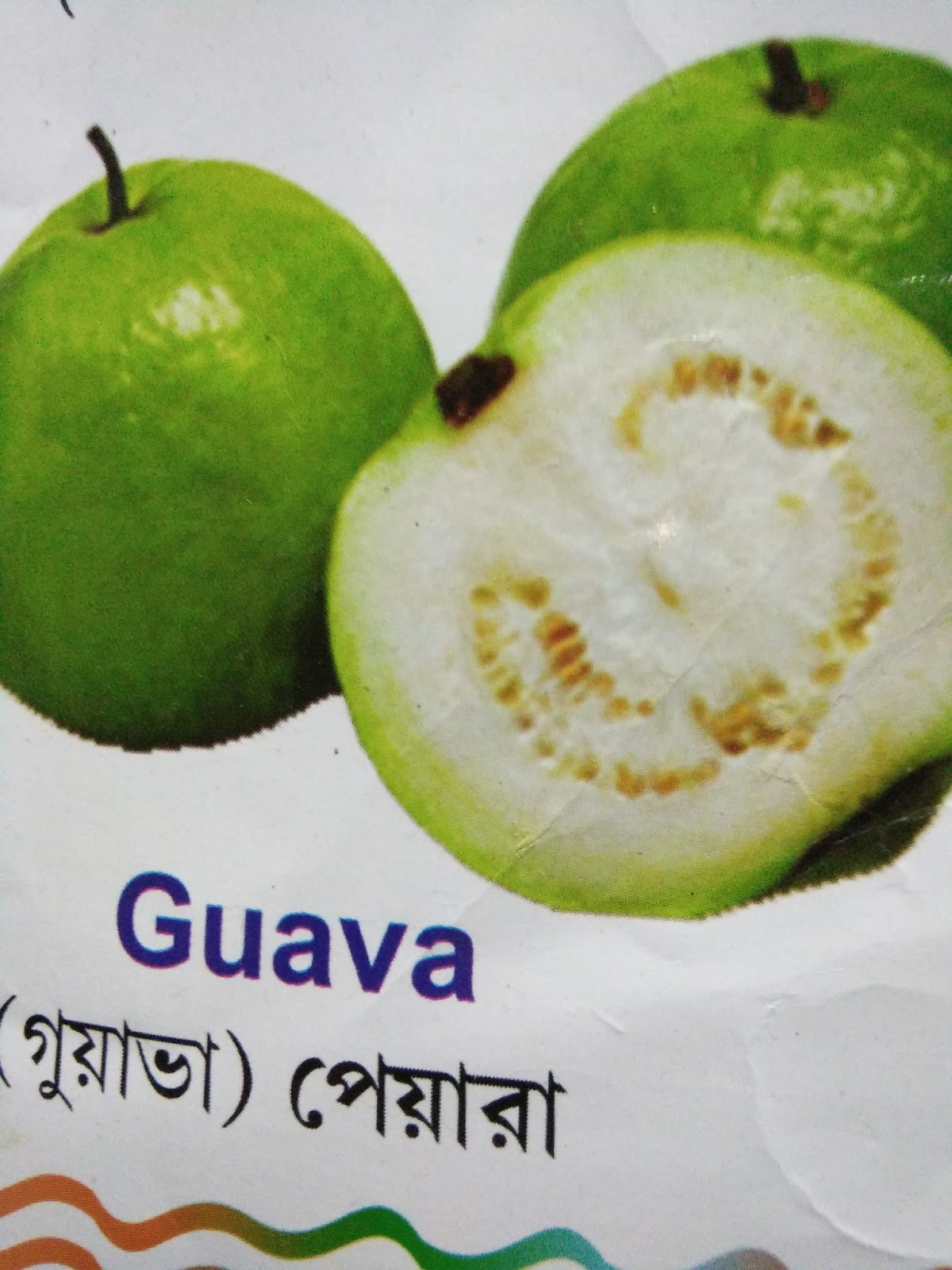 review of related literature about guava leaves Chapter 2: review of related literature chapter 3: methodology materials: beaker molder naoh (sodium hydroxide) (60 grams) (150 ml) solution gas stove guava leaves the procedure: prepare the stove to be used boil it for 10 minutes (low heat) separate the skin from the extract put it in a clean container, let it cool and then set aside.