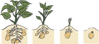 النمو عند النباتات