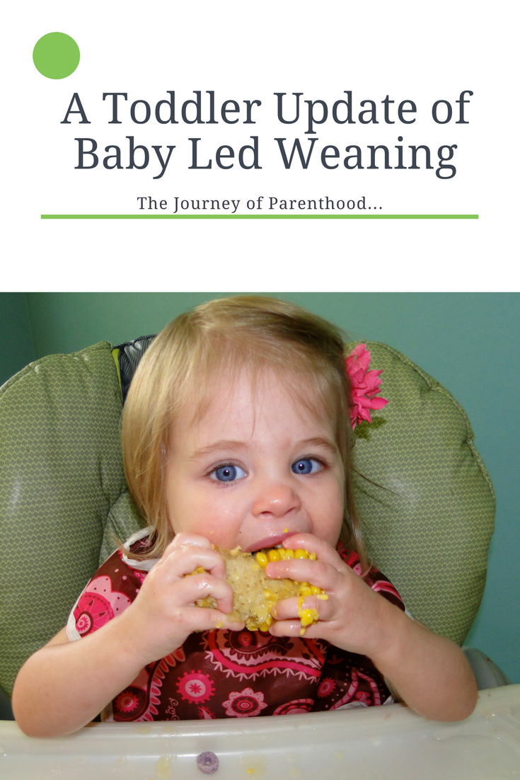 Baby Led Weaning Update