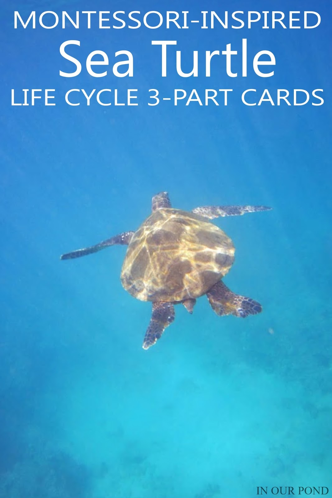 Montessori Inspired Sea Turtle Life Cycle 3 Part Cards