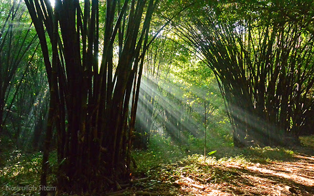 Rays Of Light, seperti ini pemandangannya jika di kebun bambu