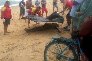 http://vnoticia.com.br/noticia/2770-corpo-em-estado-de-decomposicao-e-com-marcas-de-tiros-encontrado-na-praia-de-grussai