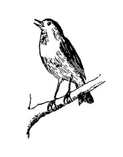 bird tree digital download image