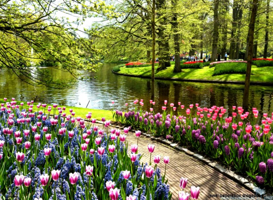 Keukenhof Wallpapers