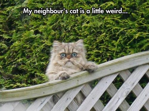Funny Weird Neighbour's Cat Joke Picture