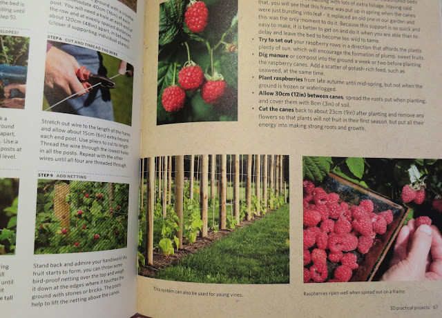 Illustration of raspberries and raspberry canes. Build a Better Garden by Joyce and Ben Russell.