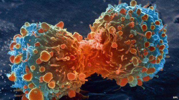 cura da prostata atraves da agua da batata