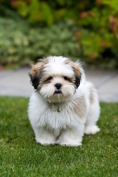 Top 5 Longest Living Dog Breeds