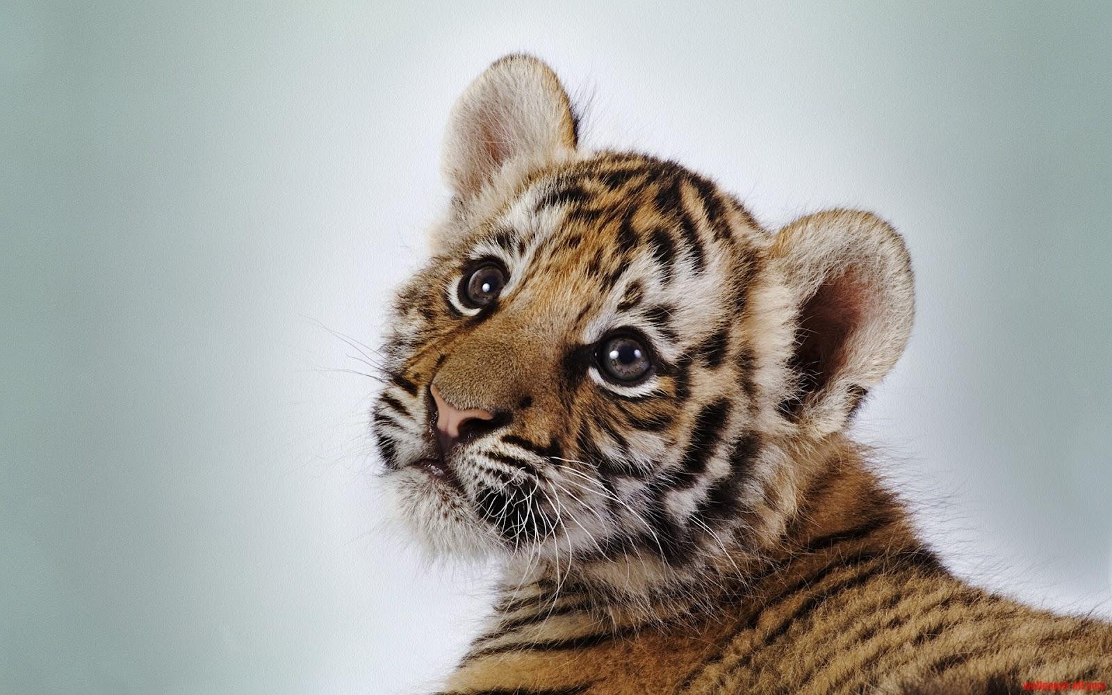 Wallpaper Proslut Pictures Of Animals