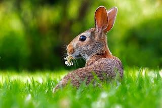 βρες το νόημα της γιορτής του Πάσχα