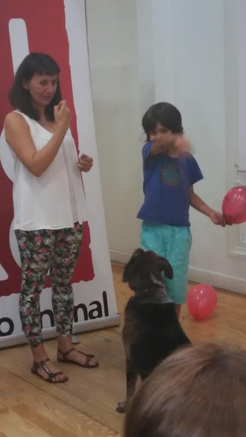 perros respeto cuidados mascotas