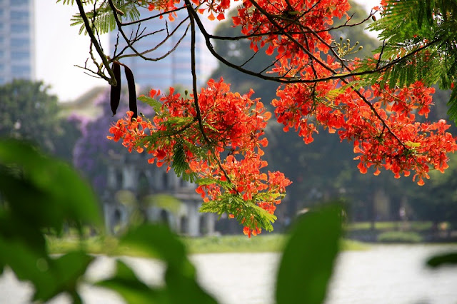 Six lovely features of Hanoi in summer 5