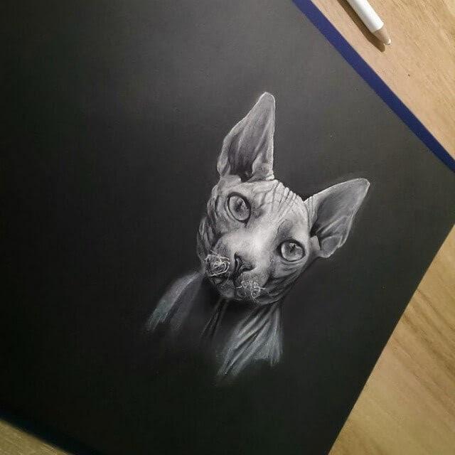 02-Sphynx-Cat-Rostislaw-Tsarenko-www-designstack-co