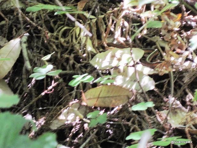 La primer serpiente que vimos, siguiendo el sendero Berry Creek