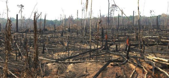 el problema de la perdida de biodiversidad