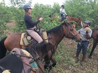 Riitta Reissaa, ratsastusmatka, Horsexplore, ratsastussafari, Botswana