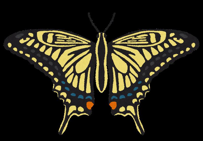 アゲハチョウのイラスト かわいいフリー素材集 いらすとや