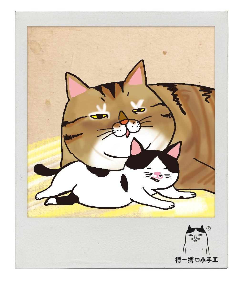畢幸不幸轉轉轉: 【一貓一故事】暖男 低B 貓の奶爸日記