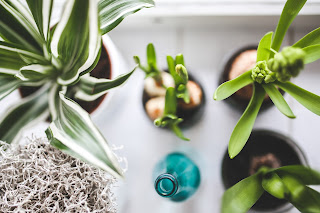 Boost Your Mood with Indoor Houseplants