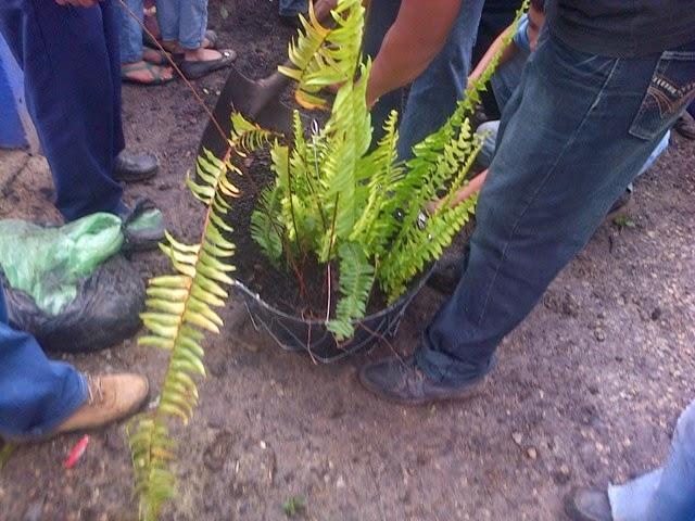 San crist bal verapaz proyecto de plantas ornamentales for Modelo de proyecto de plantas ornamentales