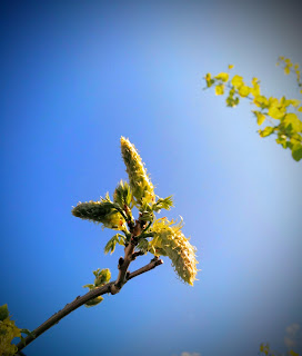 wisteria buds - growourown.blogspot.com
