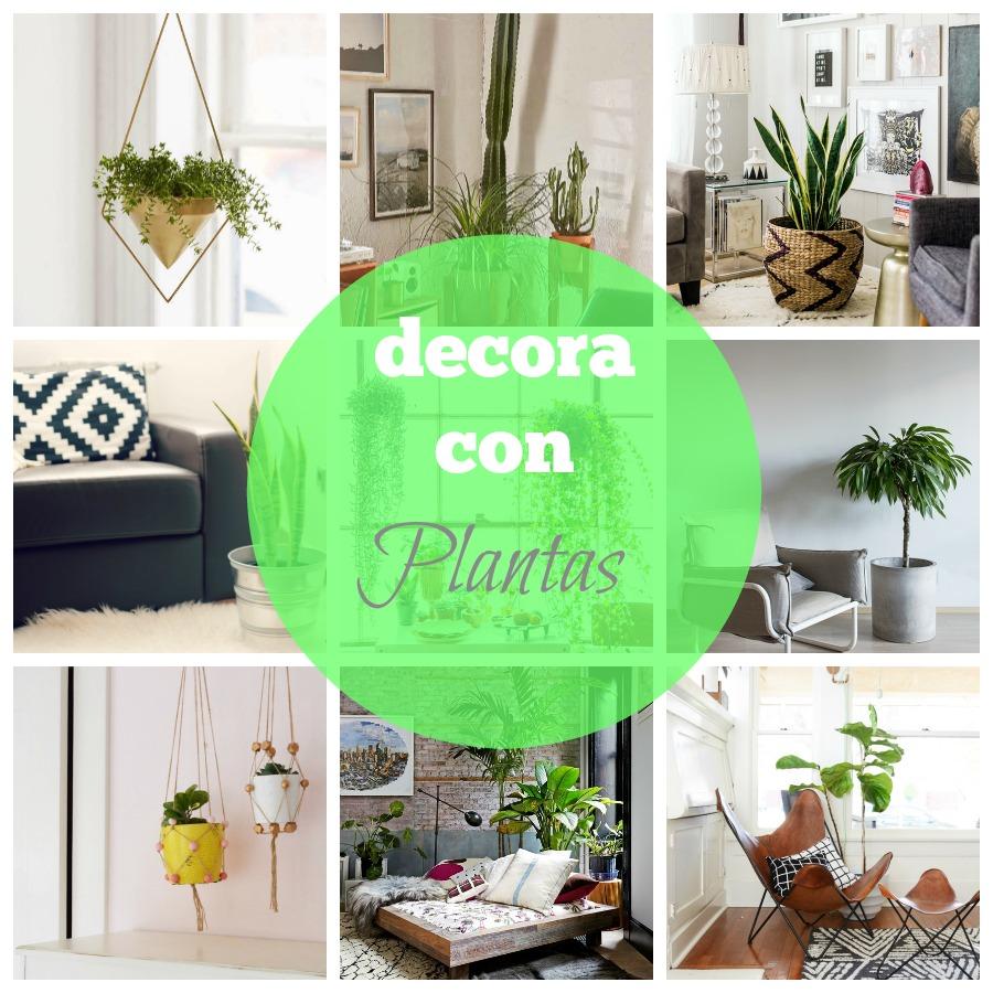 decoracion plantas interior 1
