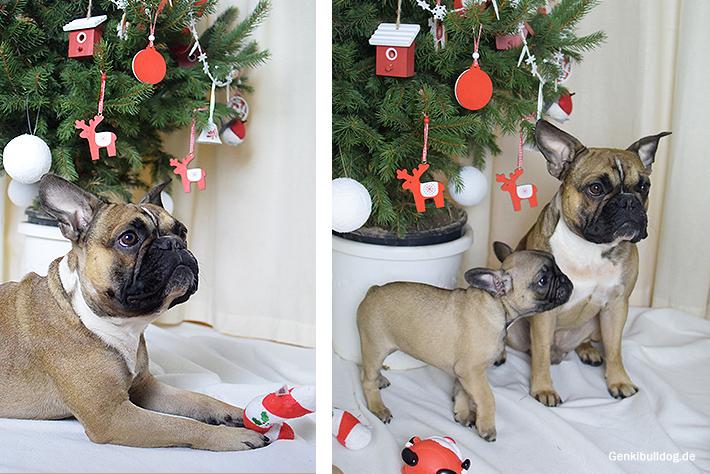 Weihnachtsgrüße Französische Bulldogge Hund Frenchie Bully Xmas