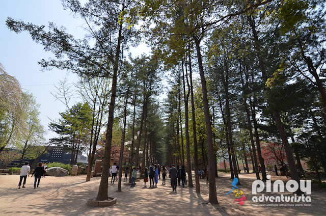 NAMI ISLAND AND PETIT FRANCE Blog
