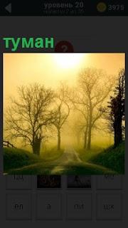 В лесу наступил настоящий туман, сквозь который ничего не видно, в том числе и дорогу