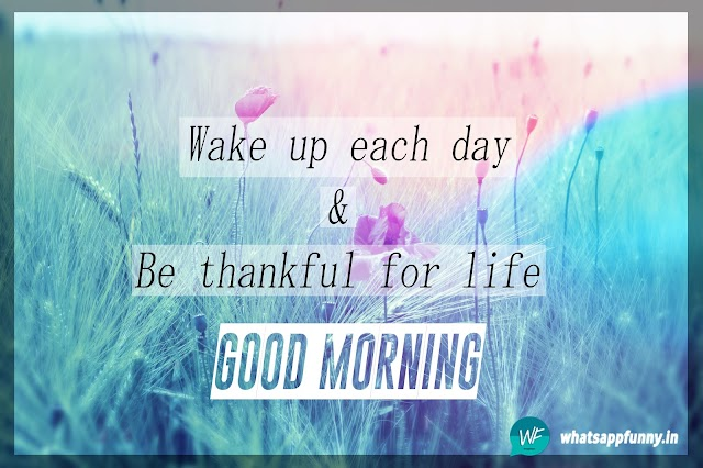 50+ Amazing Good Morning Images With Nature Quotes