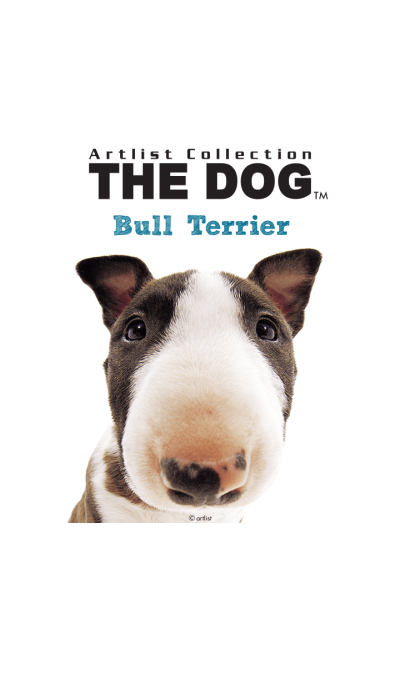 THE DOG Bull Terrier
