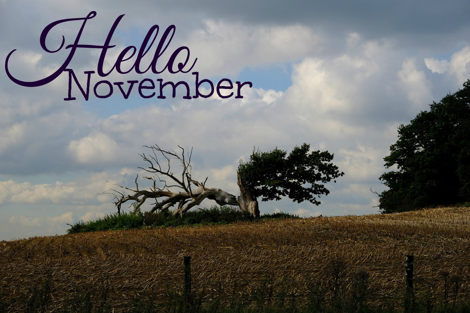 Formidable Joy | Formidable Joy Blog | Hello November | Taste Of London | A Street Cat Named Bob | My Dead Boyfriend | Twenty One Pilots | 21 Pilots | Nicola Yoon | The Sun Is Also A Star |139 Copeland Road