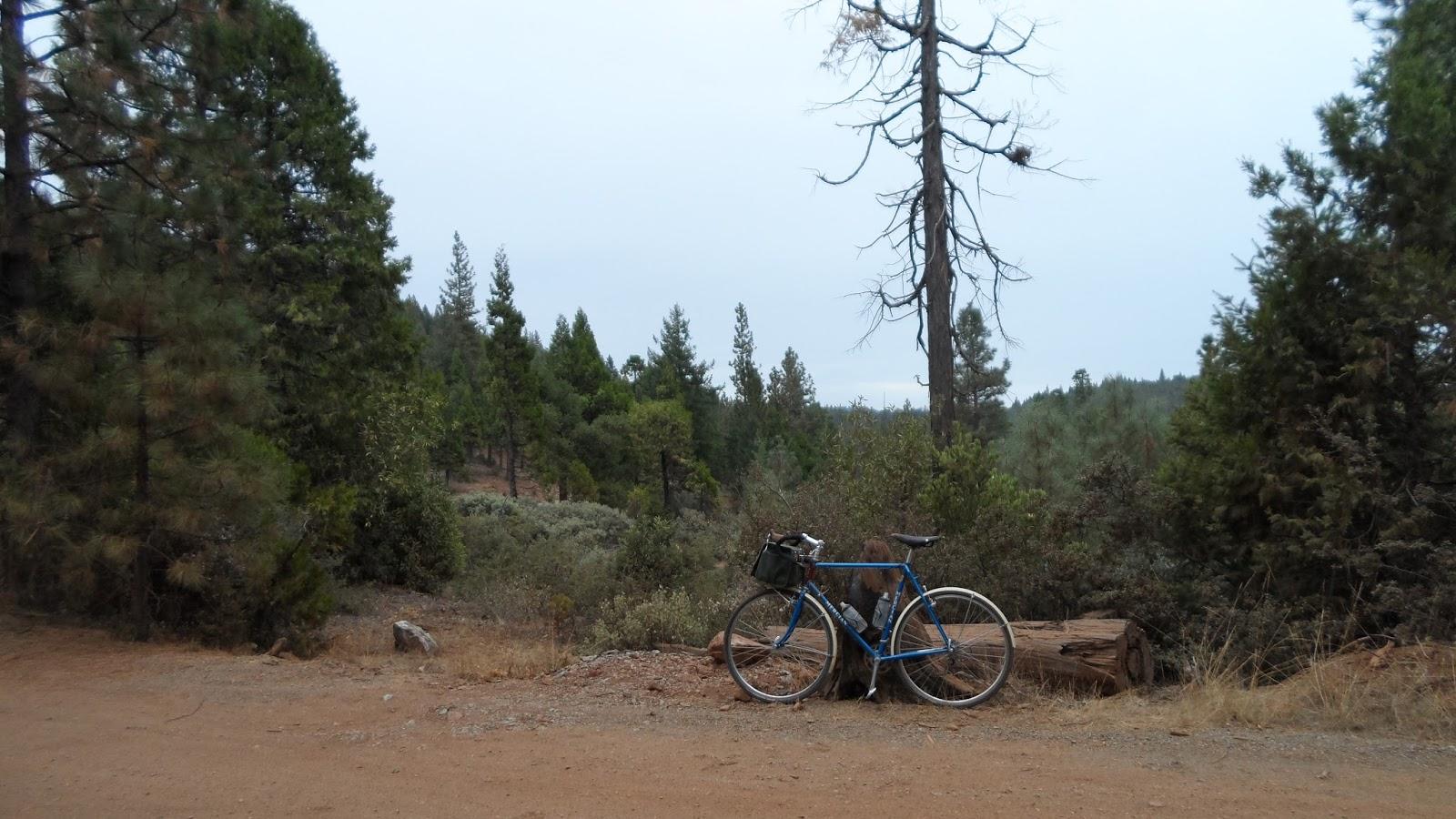 George's Bikes: 2015