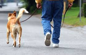 jalan - jalan dengan anjing
