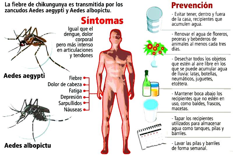 que enfermedades contagian los mosquitos