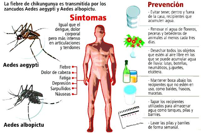 Conoce todos los síntomas, factores de riesgo y tratamientos contra el virus del Chikungunya