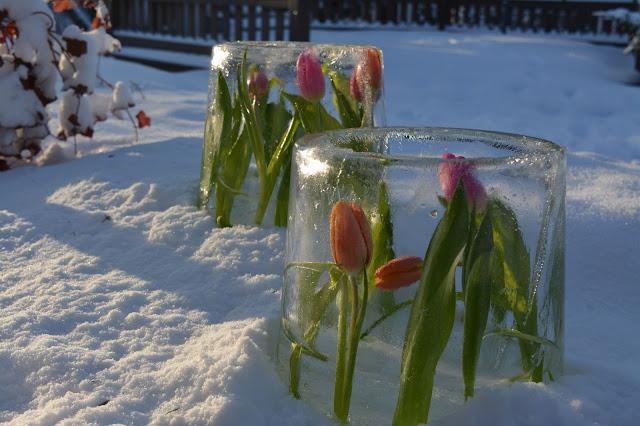 tulpaani jäälyhdyt talvi aurinko